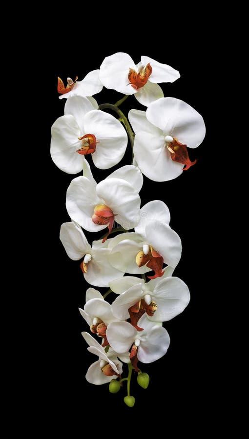Flor blanca de la orquídea del ramo artificial aislada foto de archivo
