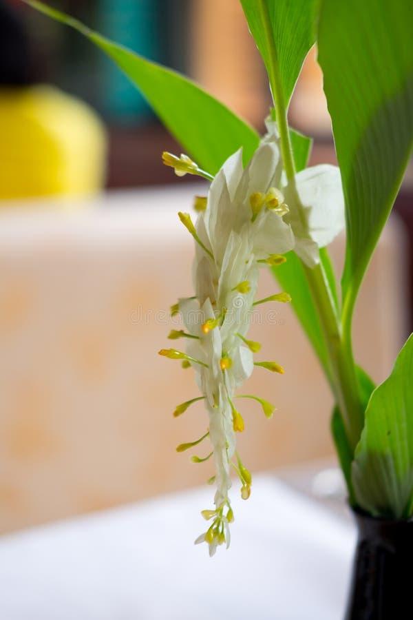 Flor blanca del dragón imagenes de archivo