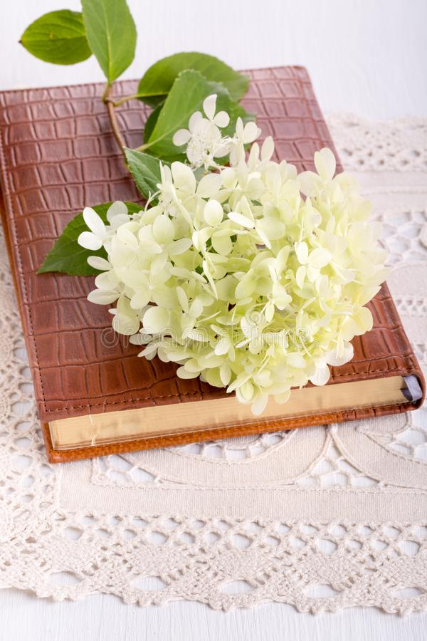 Flor blanca del Hydrangea fotos de archivo