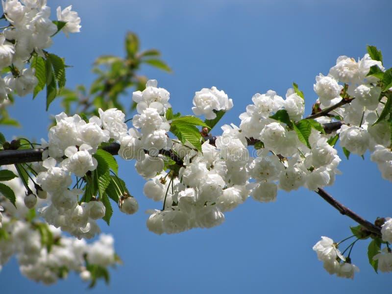 Flor blanca del pétalo en fotografía macra fotos de archivo