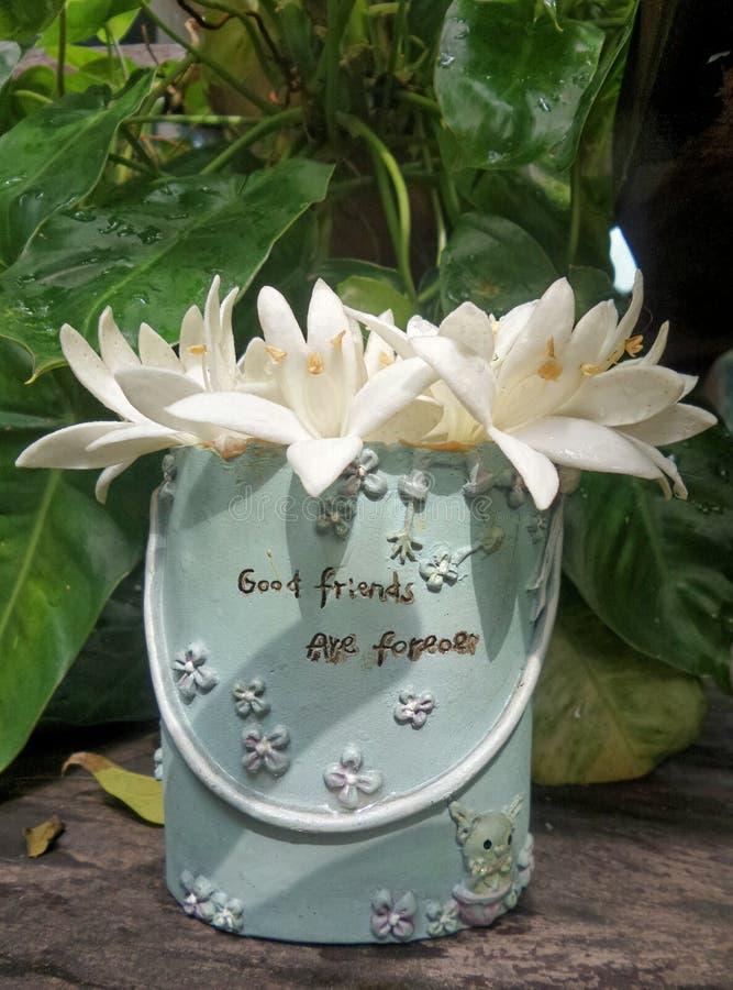 Flor blanca en azul dulce fotos de archivo