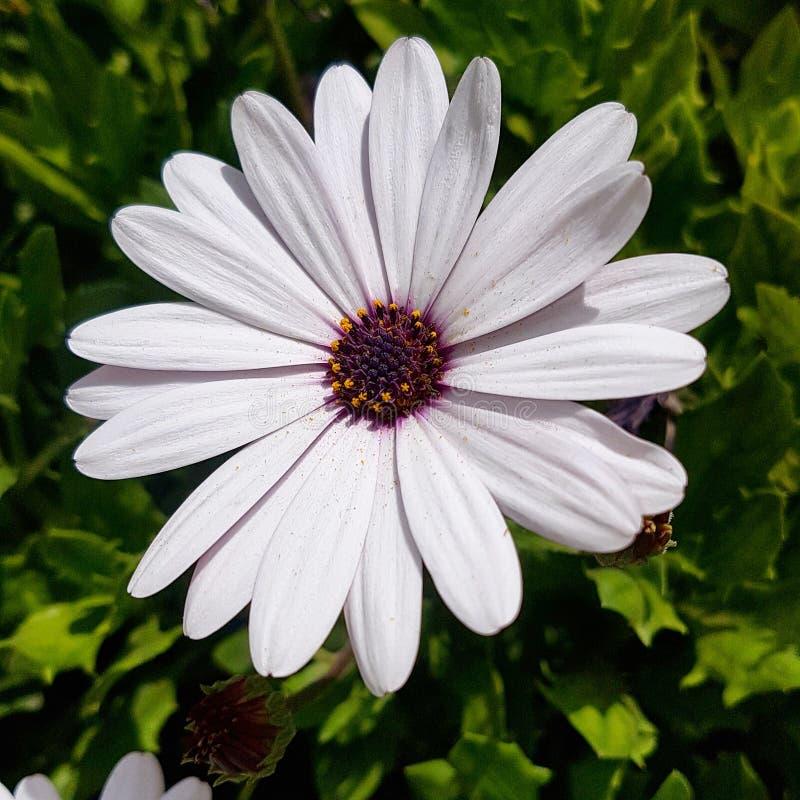 Flor blanca stock photography