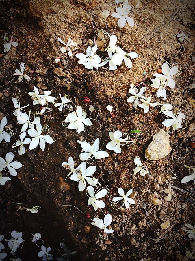 Flor blanca en la arena foto de archivo libre de regalías