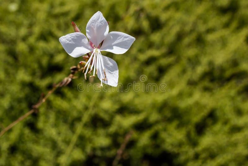 Flor blanca en un fondo borroso verde imagenes de archivo