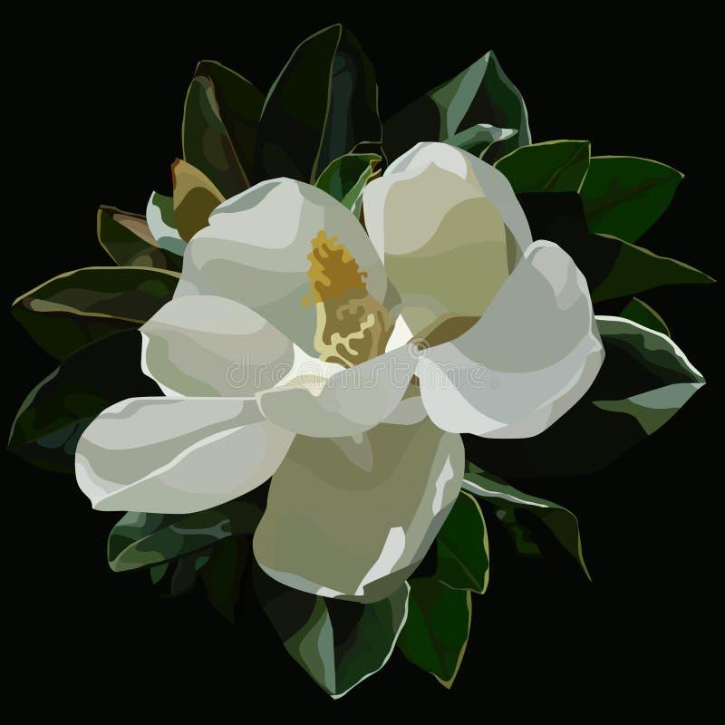 Flor blanca florecida grande pintada de la magnolia en un fondo negro stock de ilustración