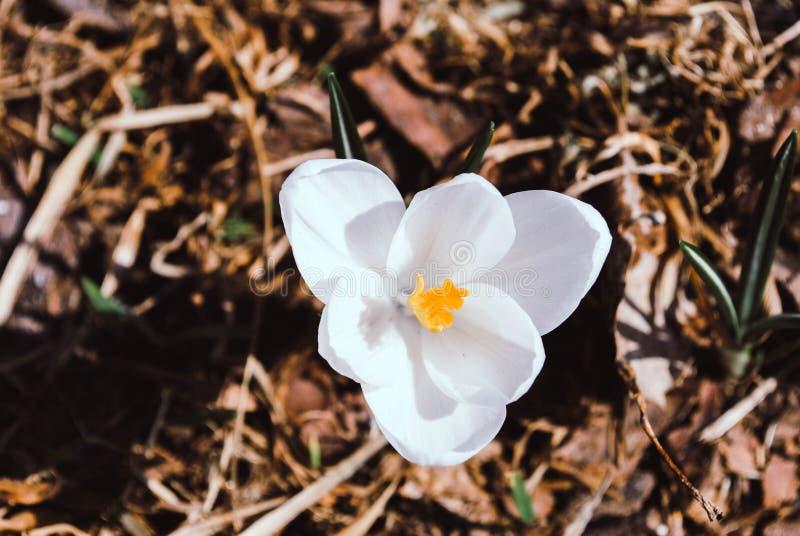 Flor blanca magnífica de la primavera contra la perspectiva del ea mojado imágenes de archivo libres de regalías