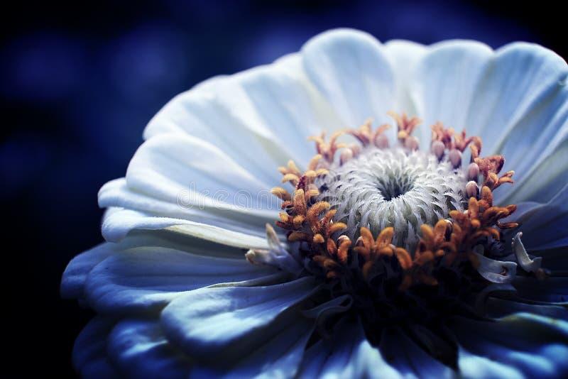 Flor blanca por la tarde fotografía de archivo