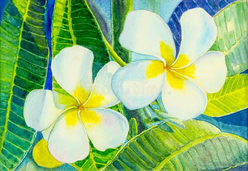 Flor blanca realista de pintura de las hojas del Plumeria y del verde libre illustration