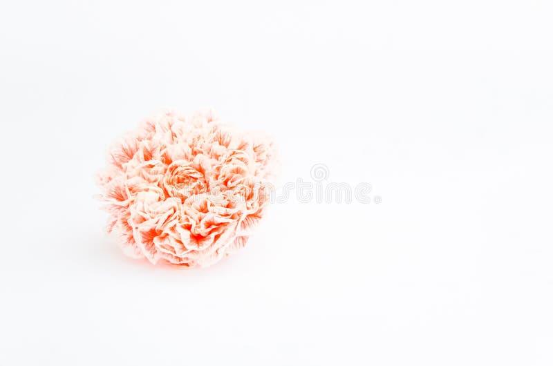 Flor blanca roja de la granada aislada en el fondo blanco foto de archivo libre de regalías