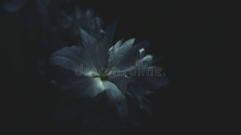Flor blanco imágenes de archivo libres de regalías