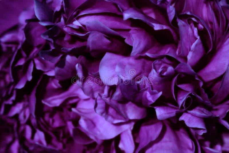 Flor bonita imagem de stock
