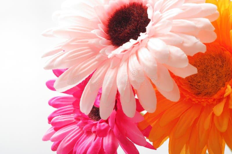 Flor bonita foto de stock royalty free