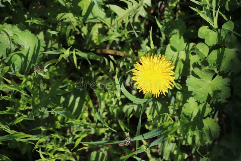 Flor bonita amarela na floresta imagem de stock royalty free