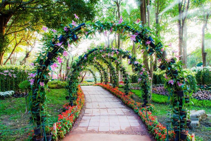 A flor bonita arqueia com a passagem no jardim das plantas decorativas fotos de stock royalty free
