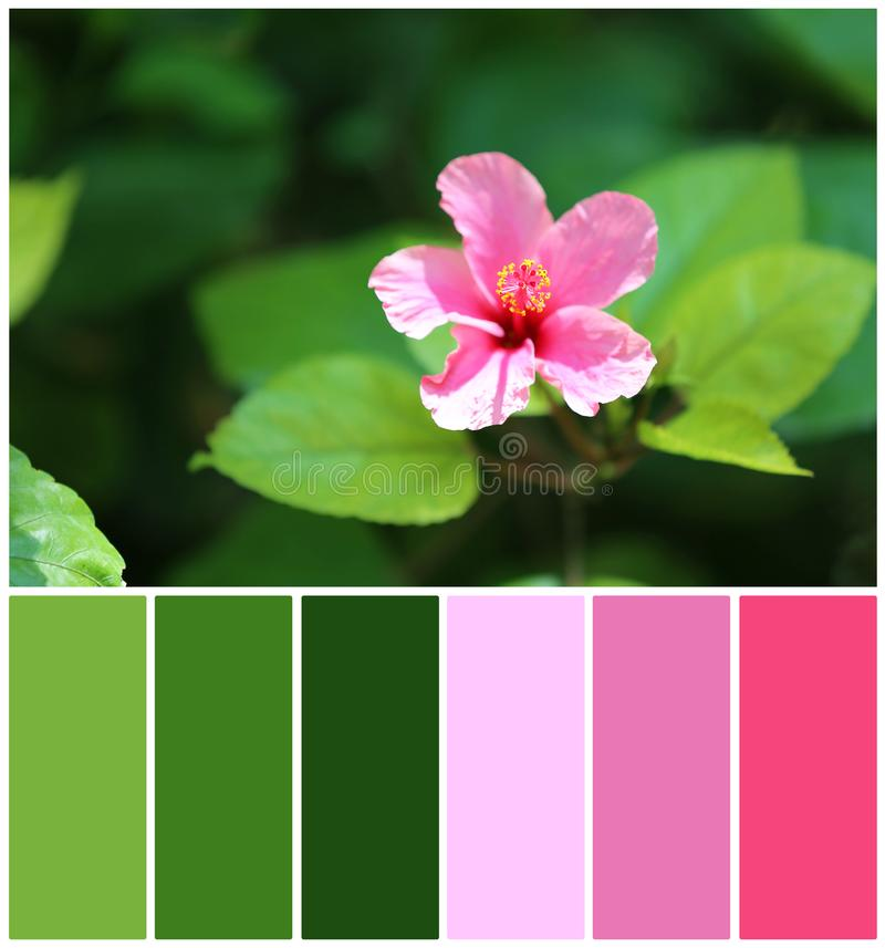 Flor bonita com folhas verdes, close up Paleta de cores natural para o projeto do interior ou da forma imagem de stock
