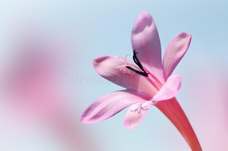 Flor bonita contra o fundo do céu azul fotografia de stock