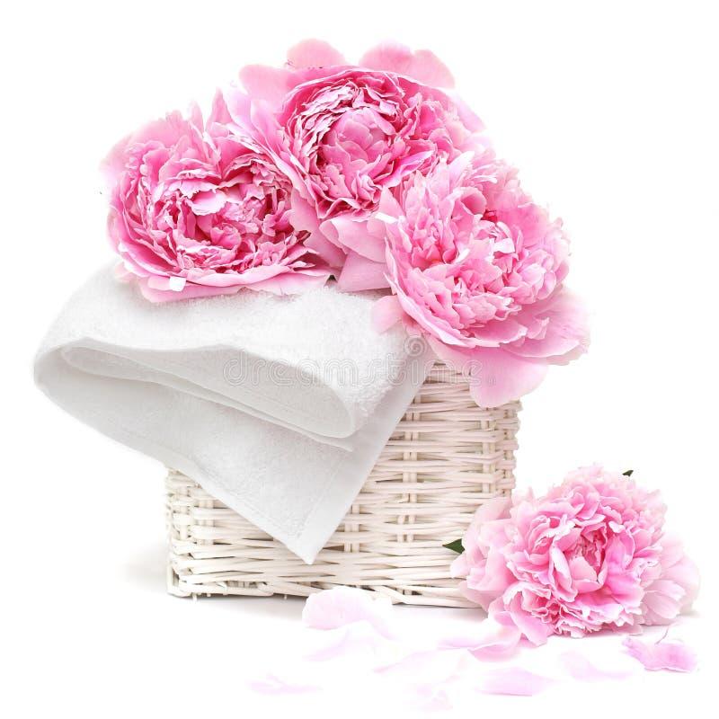 Flor bonita da cor-de-rosa pastel fotos de stock