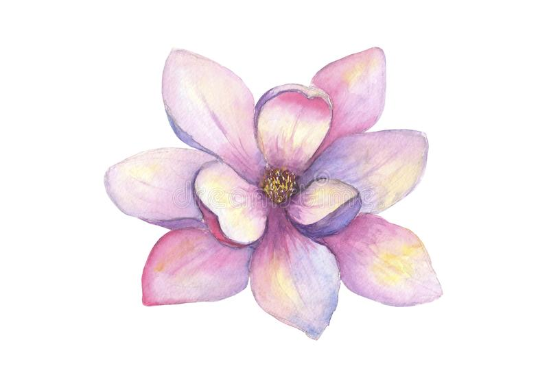 Flor bonita da magnólia da aquarela isolada no fundo branco Ilustração botânica elegante da mola do Watercolour ilustração royalty free
