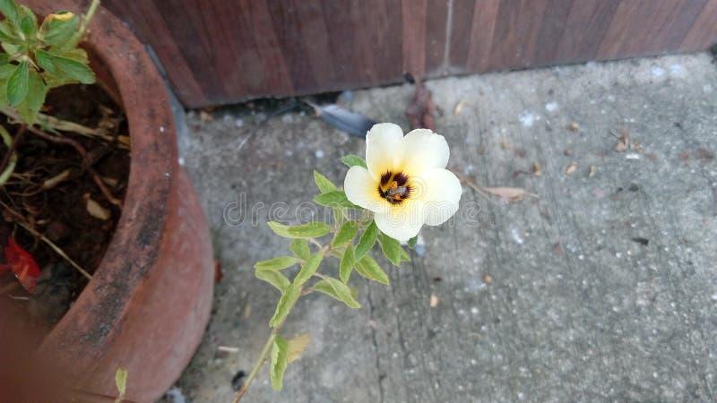 Flor bonita da manhã imagem de stock