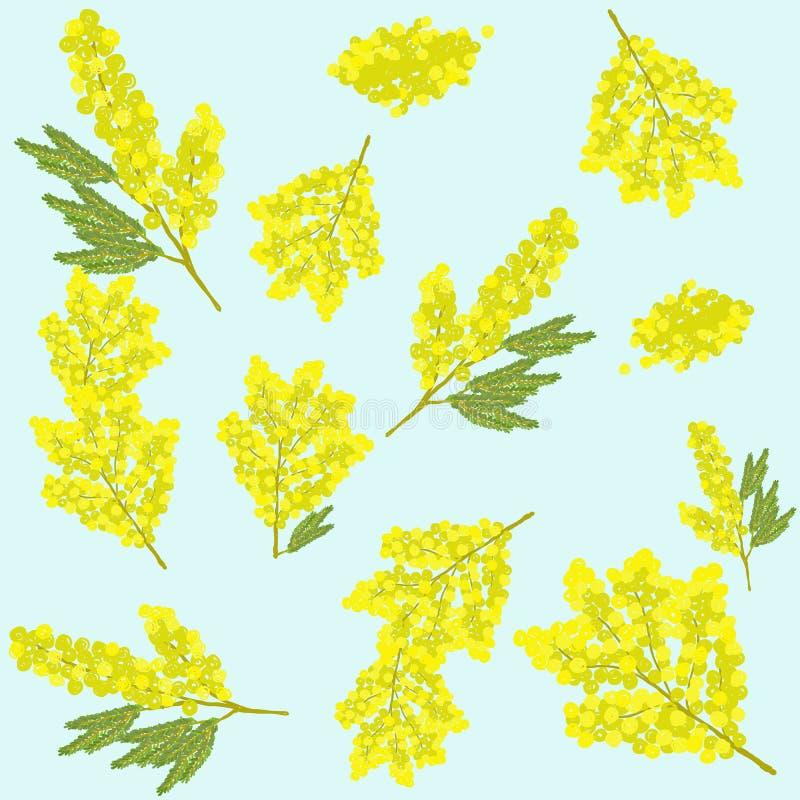 Flor bonita da mimosa ilustração stock