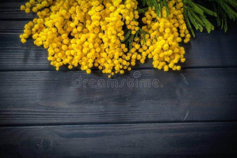 Flor bonita da flor da mimosa na obscuridade - fundo de madeira azul Molde do cartão Profundidade rasa Copie o espaço Natureza da fotos de stock
