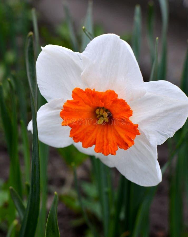 Flor bonita da mola imagens de stock
