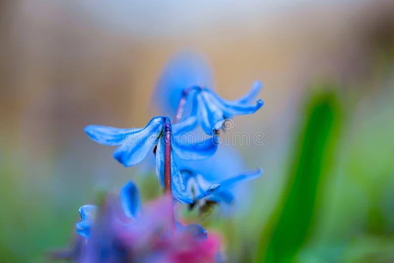Flor bonita da mola do close up imagem de stock
