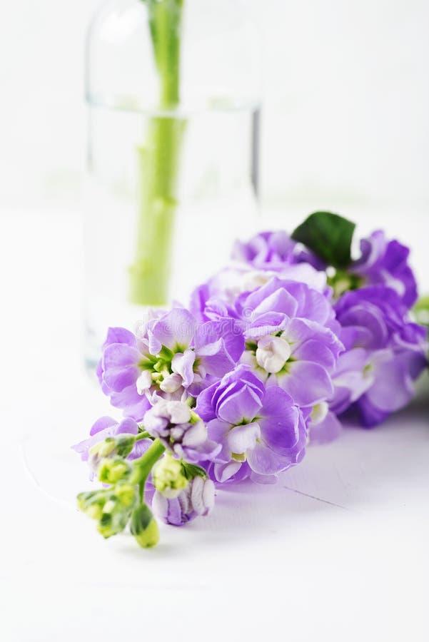 Flor bonita da mola na tabela branca imagem de stock