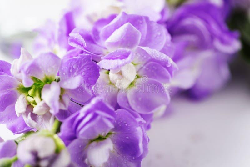 Flor bonita da mola na tabela branca fotografia de stock