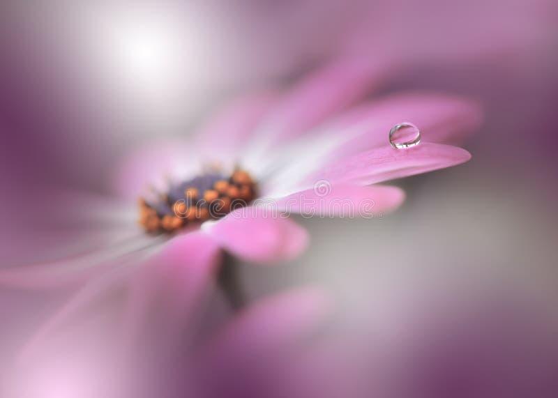 Flor bonita da natureza da mola Violet Background Copy Space Papel de parede artístico colorido Flores da margarida Gota, cores,  imagem de stock royalty free