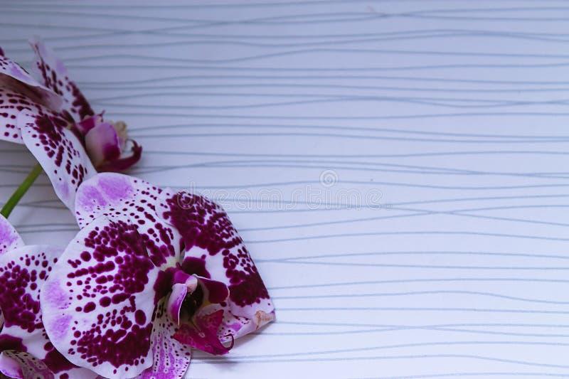 Flor bonita da orquídea em uma janela Flor na casa Decoros fotos de stock