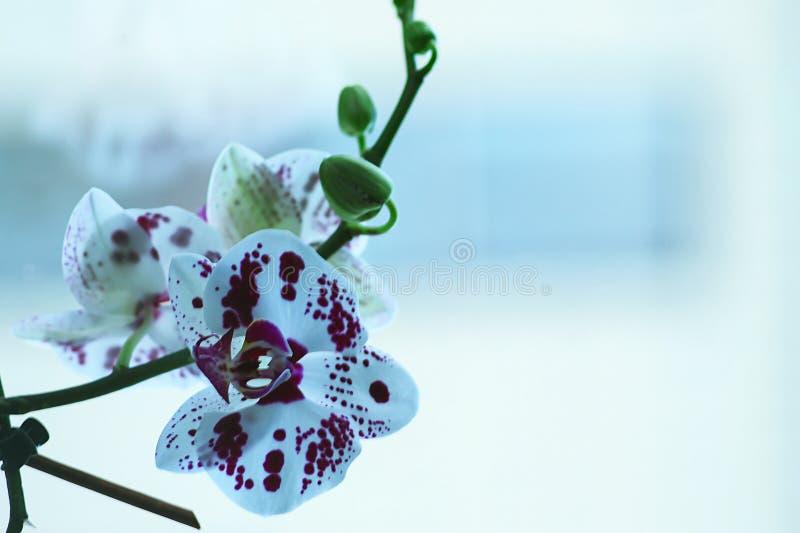 Flor bonita da orquídea em uma janela Flor na casa Decoros imagem de stock