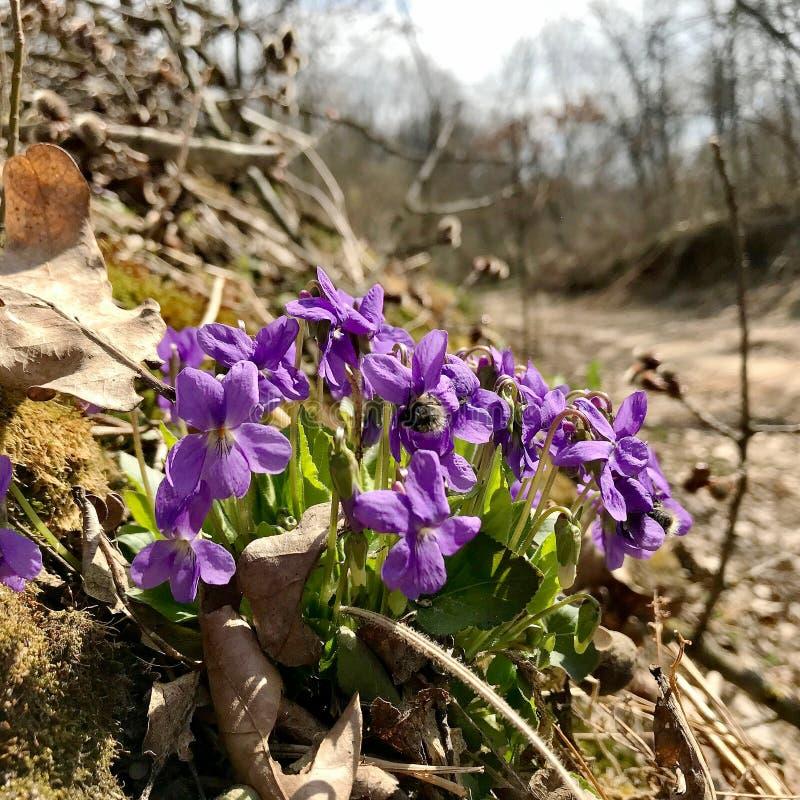 Flor bonita de florescência com folhas verdes, natureza natural de vida foto de stock royalty free
