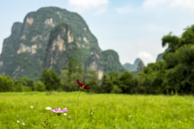 A flor bonita de Galsang fotos de stock royalty free