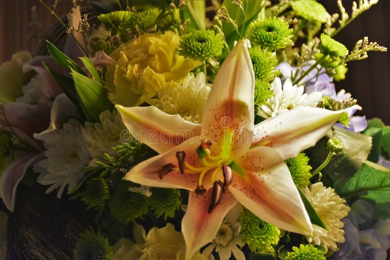 Flor bonita do dia imagem de stock