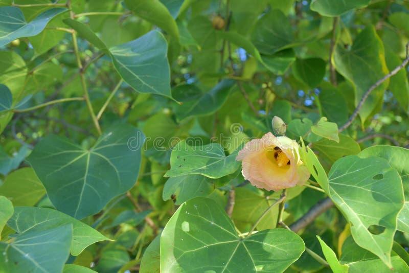 Flor bonita do dia fotos de stock