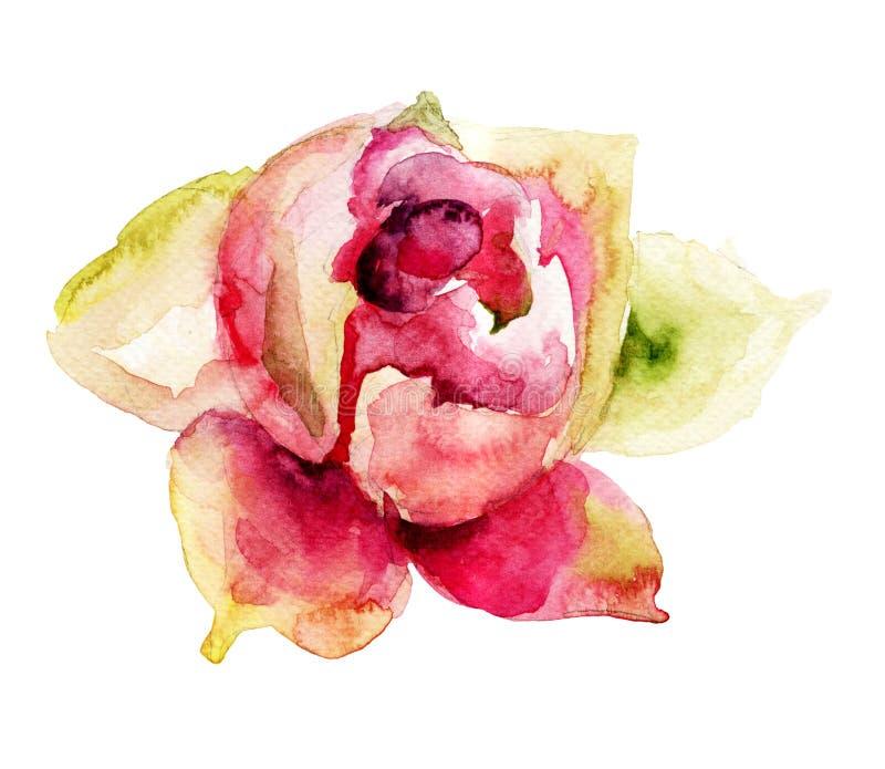Flor bonita do peony ilustração stock