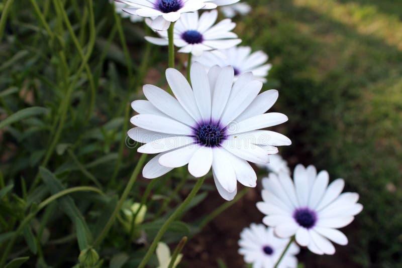 Flor bonita em um dia ensolarado foto de stock royalty free