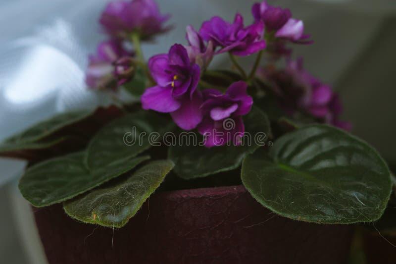 Flor bonita em uma janela Flor na casa Apa decorado fotografia de stock