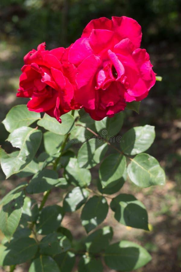 Flor bonita na floresta fotos de stock royalty free