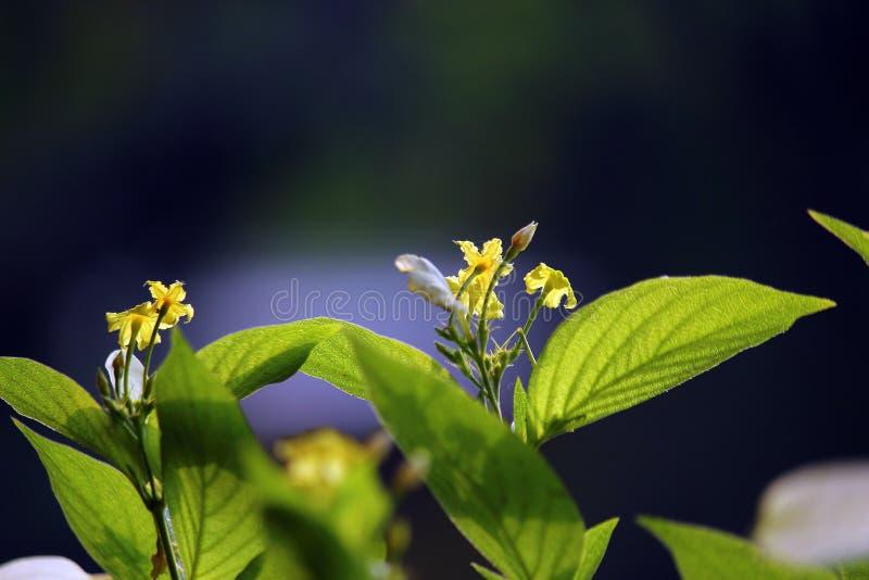 Flor bonita na planta imagens de stock