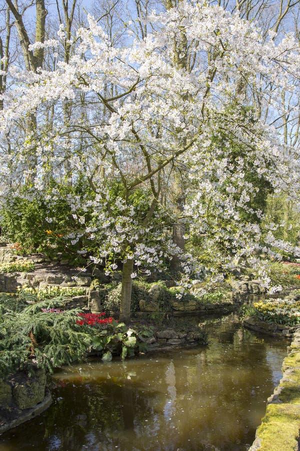 Flor bonita na primavera imagens de stock