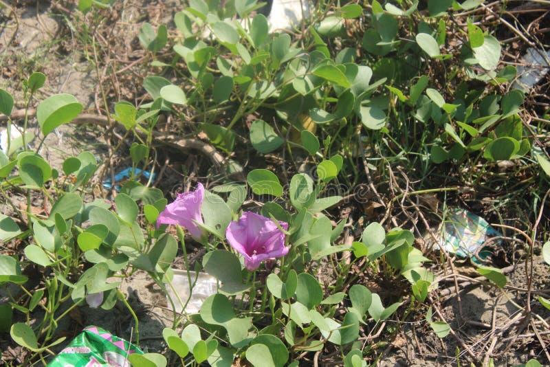 Flor bonita, parte importante de natureza imagem de stock royalty free
