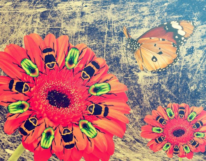 Flor bonita vermelha do Gerbera com os besouros coloridos em volta dos estames Voo da borboleta Sonhos da fantasia imagens de stock