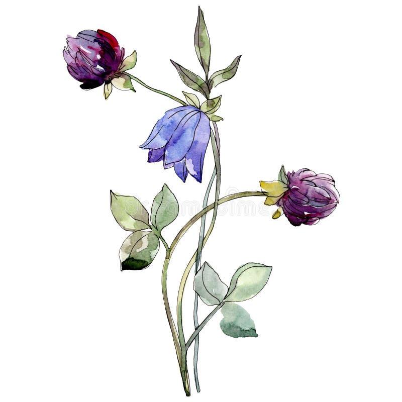 Flor botánica de la campánula azul y del trébol púrpura Conjunto del fondo de la acuarela Elemento aislado del ejemplo de las flo stock de ilustración