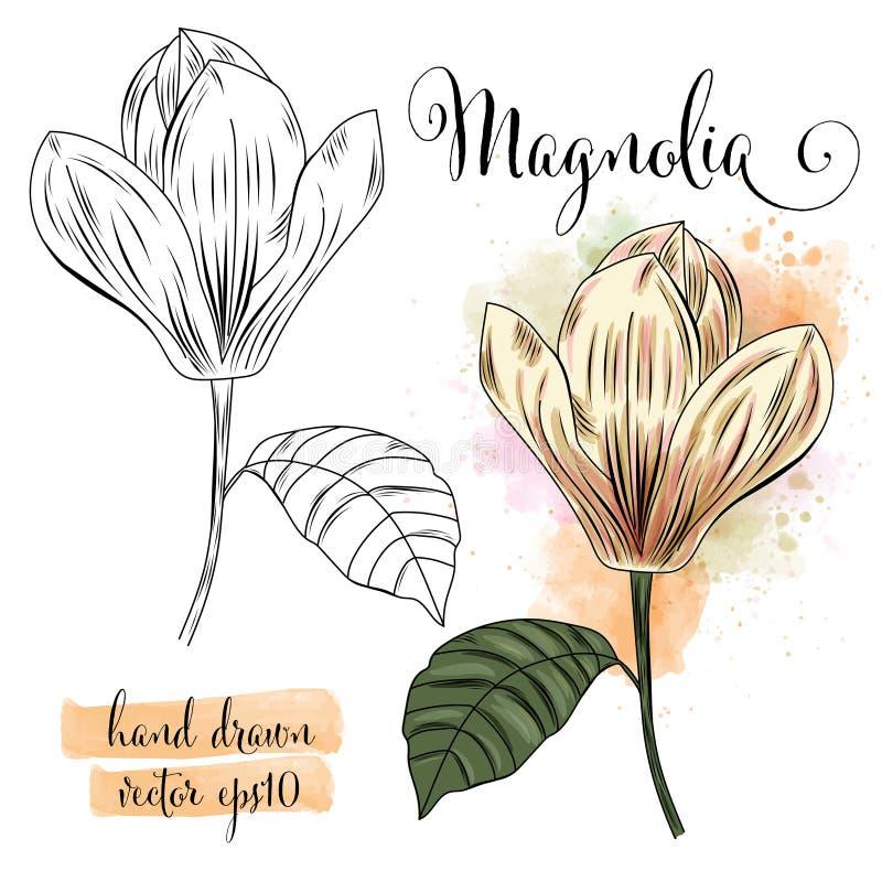 Flor botánica de la magnolia de la acuarela del arte stock de ilustración