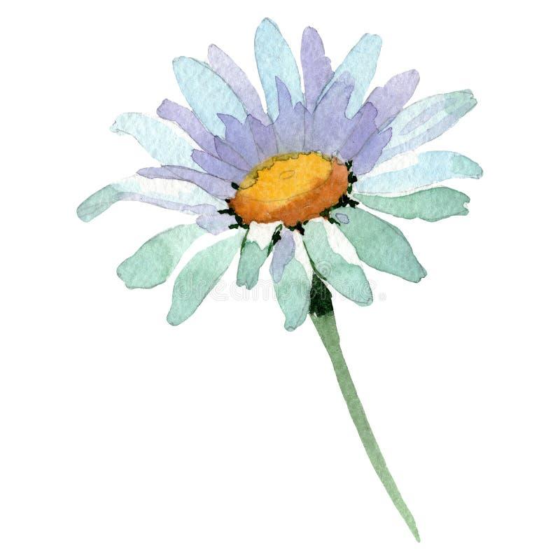 Flor botánica floral de la margarita blanca Sistema del ejemplo del fondo de la acuarela Elemento aislado del ejemplo de la marga fotos de archivo