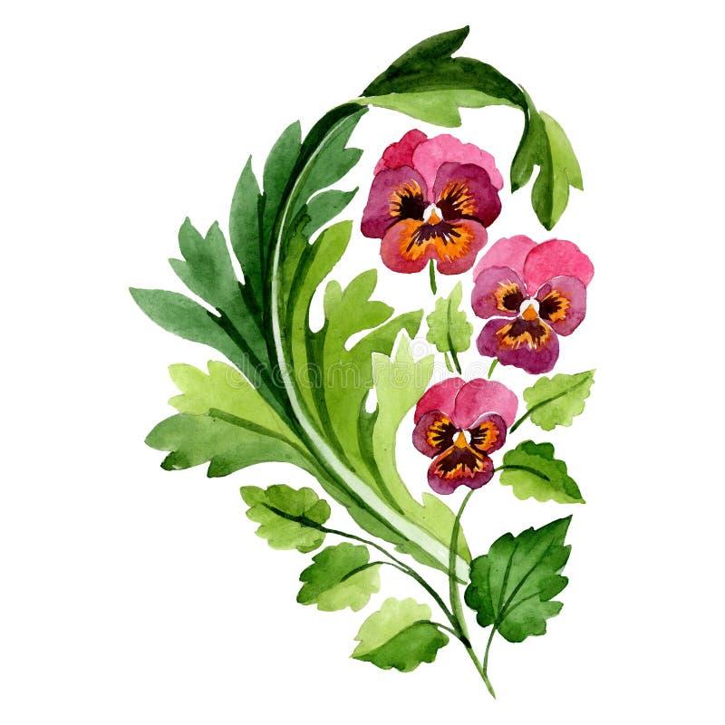 Flor botánica floral de la viola roja del rosa Sistema del ejemplo del fondo de la acuarela Elemento aislado del ejemplo del orna stock de ilustración