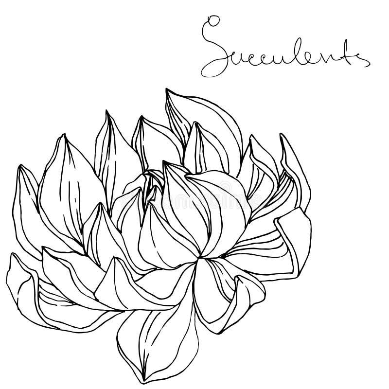 Flor botánica floral suculenta del vector Arte grabado blanco y negro de la tinta Elemento aislado del ejemplo de los succulents stock de ilustración