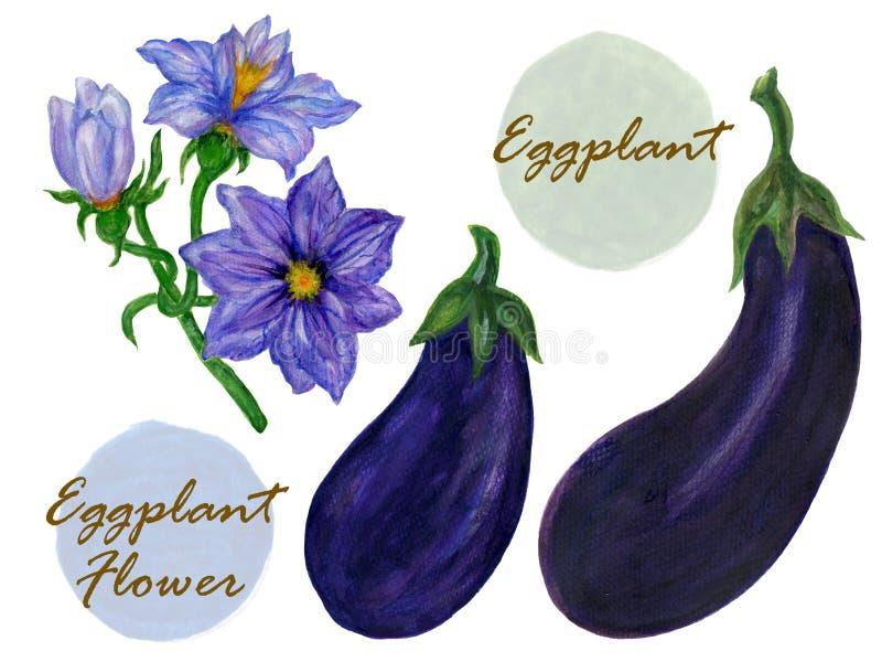 Flor botânica da beringela e da beringela da ilustração da aquarela no fundo branco fotografia de stock